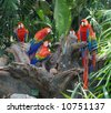 Flock parrot macaw - stock photo
