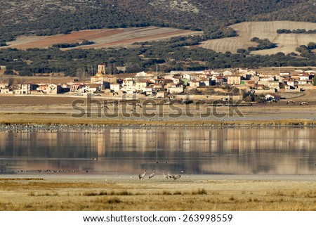 Flocks of cranes in the lagoon of Gallocanta in Teruel, Spain. - stock photo
