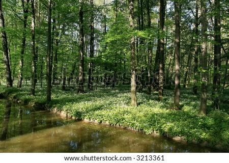 flood-plain forest - stock photo