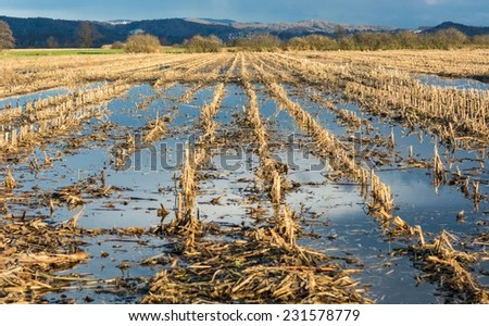 Flooded corn field after the harvest with clouds reflecting in the still water - stock photo