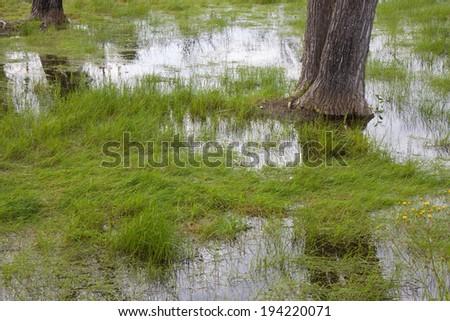 Flooded fields - Field under flood water. - stock photo
