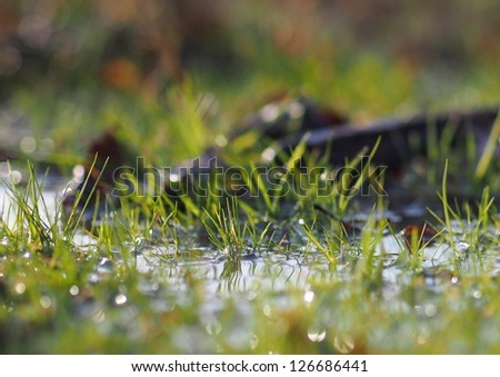 Flooded grass - stock photo