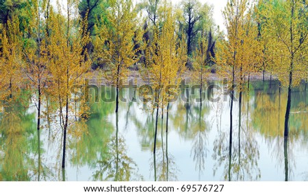 Flooded trees in spring