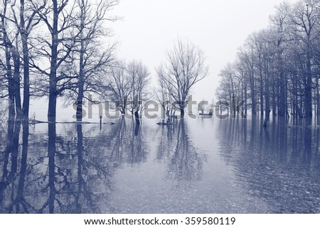 Flooded trees; man in boat - stock photo