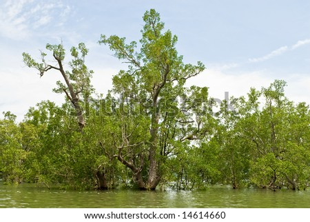 flooding mangrove tree at the forest, Thailand - stock photo