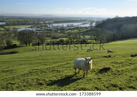 Floods in the Severn Vale near Maisemore - stock photo
