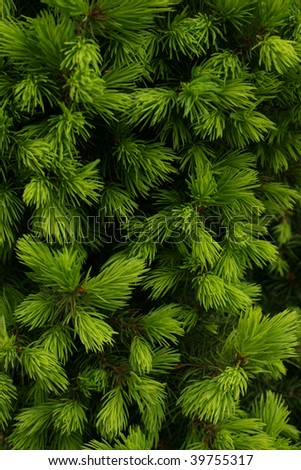 Flora green background - Thuia