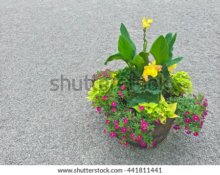 Floral arrangement with colorful plants and blooming flowers. Outdoor decoration. - stock photo