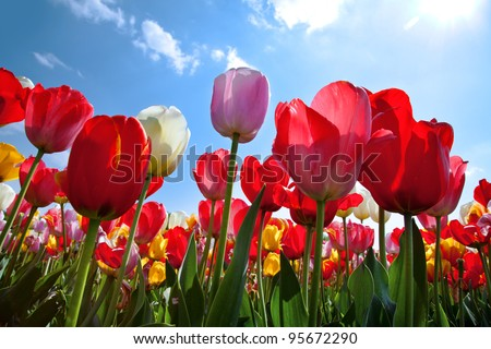 Floral Background. - stock photo