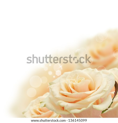 Floral background from fresh pastel roses - stock photo