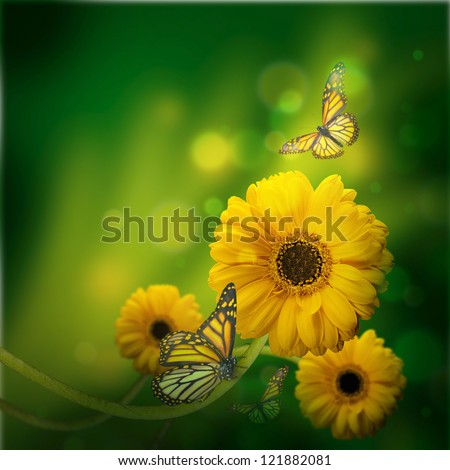 Floral background, gerbery in the rays of light and butterfly - stock photo