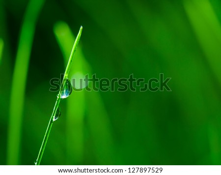 Floral background. Grass with dew drops. - stock photo