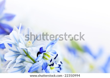 Floral background of first spring flowers close up - stock photo