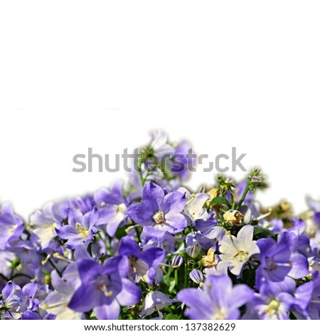 Floral background of spring flowers isolated on white background