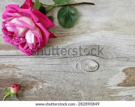 Floral background or border suitable for text. Double pink rose on a wooden background.