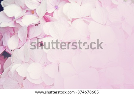 Floral background pink hydrangea flowers (soft color style) - stock photo