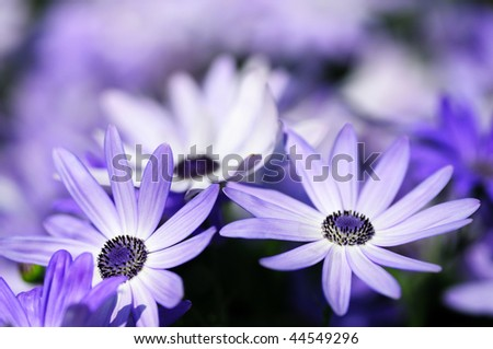Floral background (soft focus) - stock photo