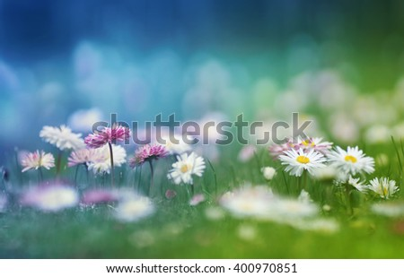 Floral background. Spring summer floral background. Flowering daisies in the grass. Green grass and chamomiles in the nature. Flowering meadow. Blue and green. - stock photo