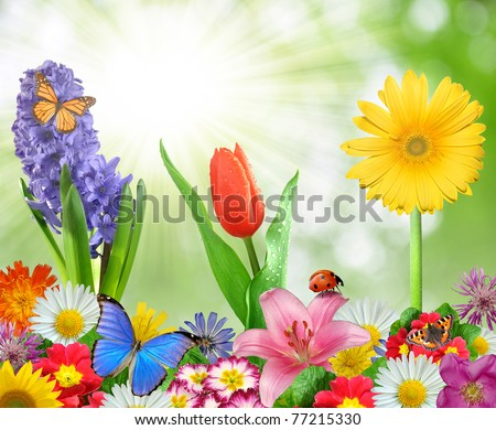 floral background with butterfly and ladybug - stock photo
