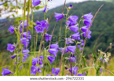 floral background with Carpathian bluebells, close-up outdoor shoot - stock photo
