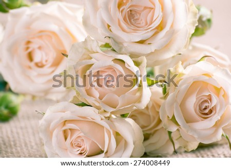 Floral background with cream roses on sackcloth - stock photo