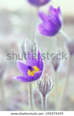 floral background with dream-grass - stock photo
