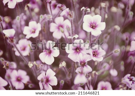 floral background with instagram style filter. - stock photo
