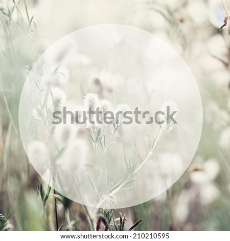 Floral background with round shape copyspace - stock photo