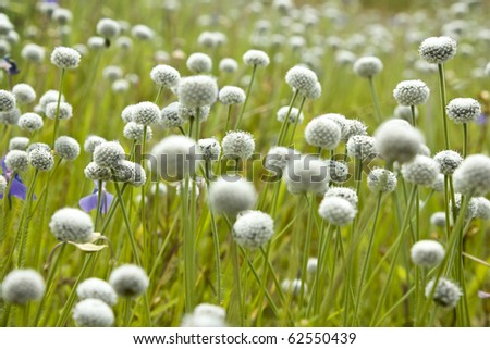 Floral background white ballshaped flowers stock photo royalty free floral background with white ball shaped flowers mightylinksfo