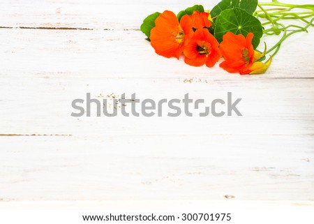 Floral backgrounds with flowers of nasturtium arranged on white wood useful as greeting card, mothers day card or invitations card - stock photo
