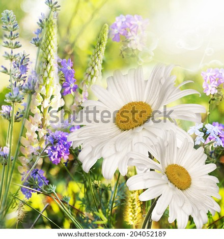 Floral beautiful Wild Flowers - stock photo