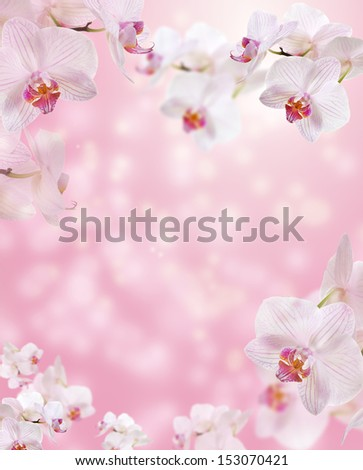 Floral border with Orchid - stock photo