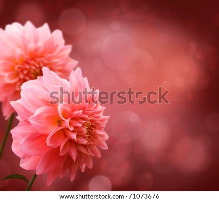 Floral border with pink Dahlia - stock photo