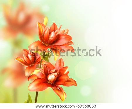 Floral Border with red lily - stock photo