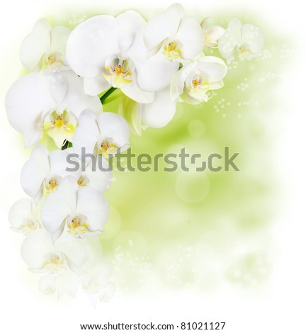 Floral border with white orchid - stock photo