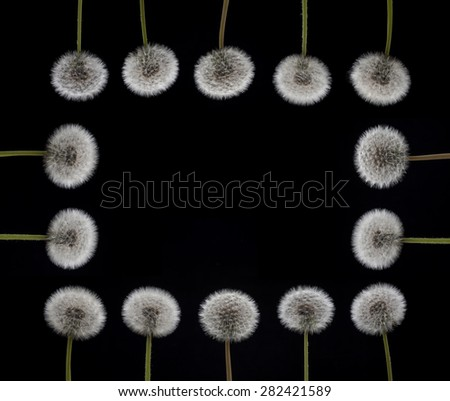 Floral Borders in Black Background, Dandelion Frame. Dandelion Frame. - stock photo