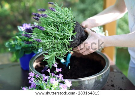 Floral composition.Female plants in pot plants forming a beautiful composition flower - stock photo