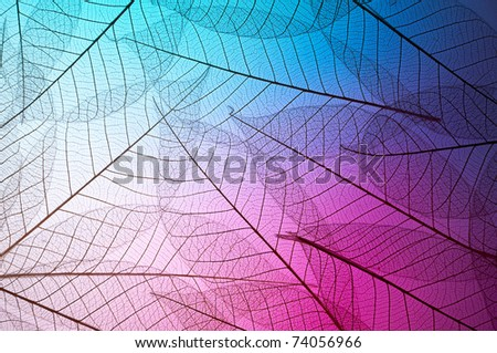 Floral design background - stock photo