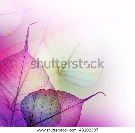 Floral Design.Leaves - stock photo