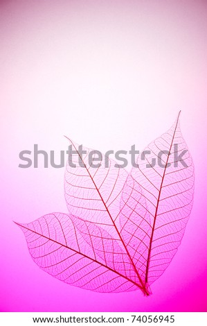 Floral design with skeleton leaves with back light