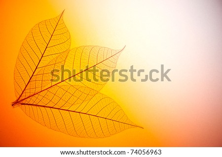 Floral design with skeleton leaves with back light - stock photo