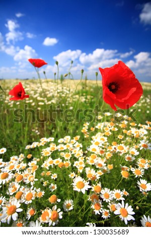 Floral field with red and white flowers under the summer sun - stock photo