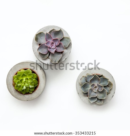 Floral hipster pattern over white background. Three Succulents in concrete pots. - stock photo
