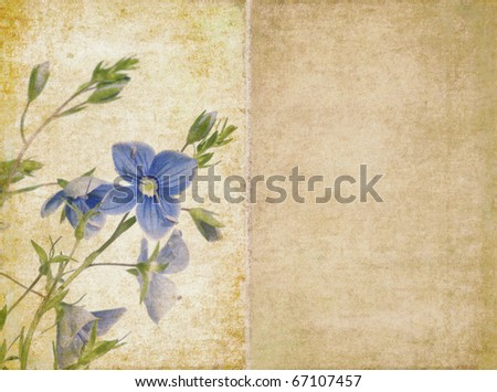 floral illustration and background with earthy texture