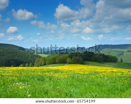 Floral meadow under blue sky - stock photo