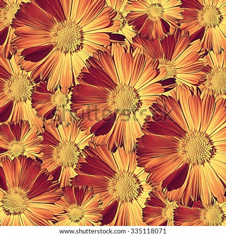 Floral print with calendula. Pattern with orange summer flowers. - stock photo