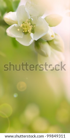 floral spring background - stock photo