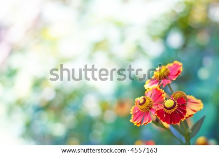 floral theme background with space for text - stock photo