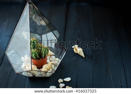 Florarium Glass vase with succulent plant. Miniature cactus succulent plant in a glass florarium vase - stock photo