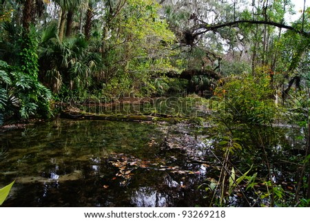 Florida Everglades waterway through forest - stock photo